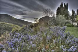 Agriturismo in Toscana a Cortona vicino al Lago Trasimeno e Arezzo